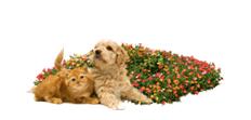 Puppy-Cat