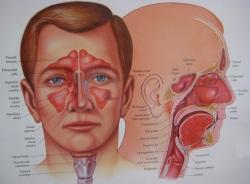 nasal-endoscopy